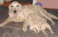 Antuanetta с щенками - прислала Ольга