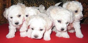 а так выглядят щенки