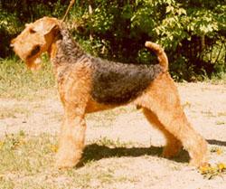 дворянин среди собак