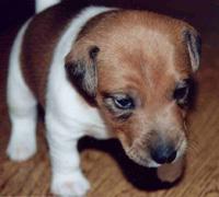 эти глаза никого не смогут оставиь равнодушным! фото с сайта: www.mysobaka.narod.ru