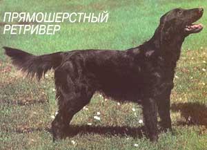 это очень элегантная собака